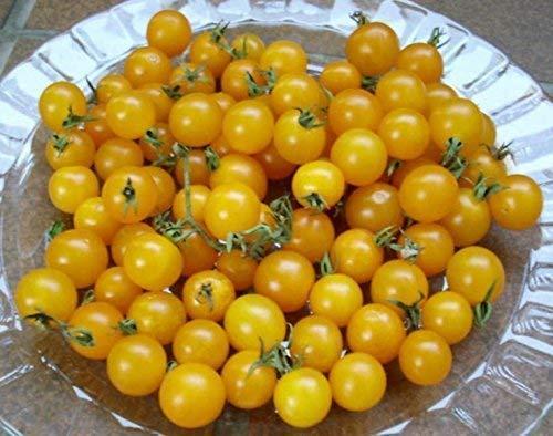 gelbe Johannisbeertomate Urtomate, Wildtomate - 20 Samen