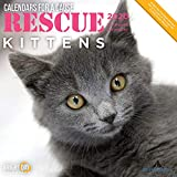 2020 Rescue Kittens Wall Calendar by Bright Day, 16 Month 12 x 12 Inch, Cute Cat Kitty Animals for a Cause Feline Calico Maine Coon Tuxedo