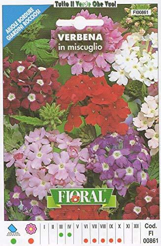 AGROBITS VERVEINE en Miscuglio - AIUOLE Bordure Giardini ROCCIOSI-Floral - A SEMENTI