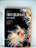 海の生きもの―海岸動物 カラー (1972年) (山渓カラーガイド〈54〉)