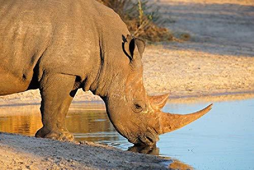 Rompecabezas de 1500 Piezas, Rompecabezas de madera, Juego de Rompecabezas de relajación, Rompecabezas para el Cerebro, Regalo para niños y Adultos (87x57cm) Rinoceronte blanco sudafricano