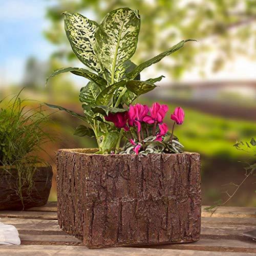 Willys vakmarkt plantenbak boomstam bloempot houtlook plantenbak polyhars kunststeen 25x24x18 cm