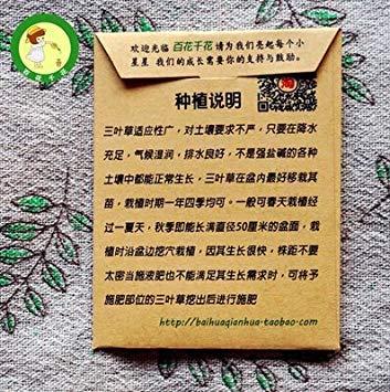 Vistaric 50 stücke Büro Schreibtische Mini vier kleeblatt samen, glücklicher klee zimmerpflanzen bonsai blumensamen