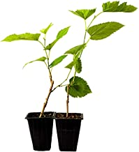 asian trees for sale