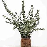 WHK Piante Artificiali Decorative-Foglia di eucalipto, Fiori secchi Naturali Foglia di eucalipto Mazzo di eucalipto Fai da Te Forniture per Feste Nuziali