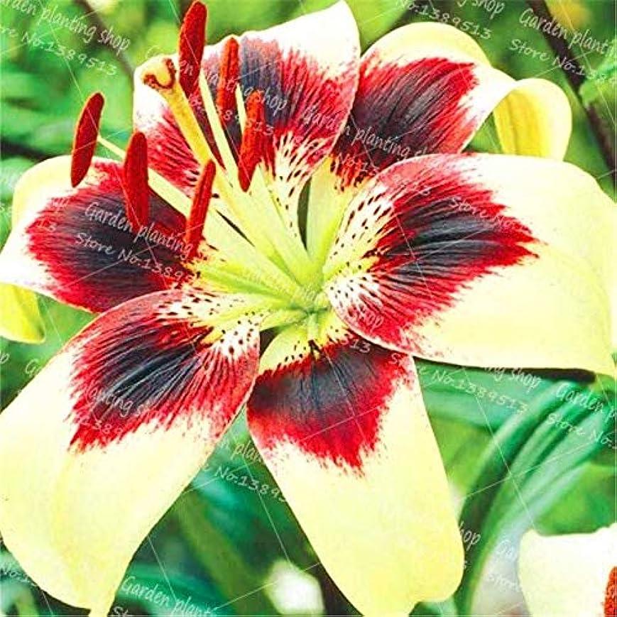 アクセシブルトレード石の100PCS /バッグ香水ユリの花の盆栽の植物屋内と屋外の植物園の花の家族の装飾鉢植えの花:12