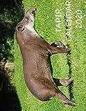 Tapir Calendar 2020 - Hope Huggs