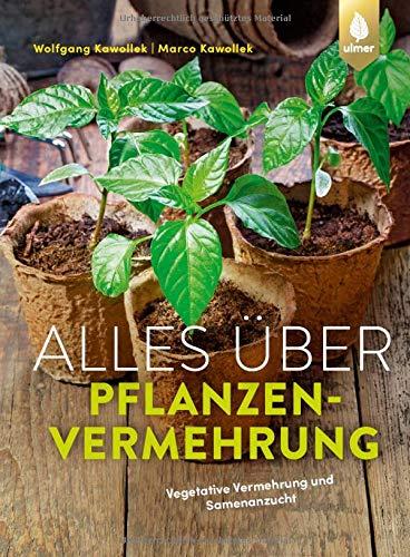 Alles über Pflanzenvermehrung: Vegetative Vermehrung und Samenanzucht