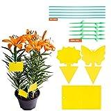 YHmall 30 Pcs Trampa Moscas, Atrampa Moscas Insectos Amarillo de Doble Cara para Proteger Plantas y Atrapar Moscas, Insectos Voladores