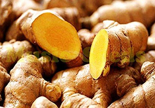 1bag = 80pcs chaude vente Ginger Graines Balcon Légumes en pot Four Seasons Zingiber Seeds bonsaï maison et plantes de jardin