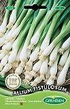 Germisem Allium Fistulosum Semillas de Cebollino 2 g, EC1123