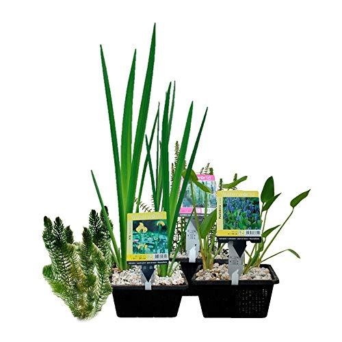 Waterworld Teichpflanzen Paket Mini-Teich - 15er Set Wasserpflanzen, Winterhart - für 0,5-1 m³ Wasser - 1 Seerose, 6 Sauerstoff Pflanzen, 8 Sumpfpflanzen - Inklusive Pflanzkorb Sets