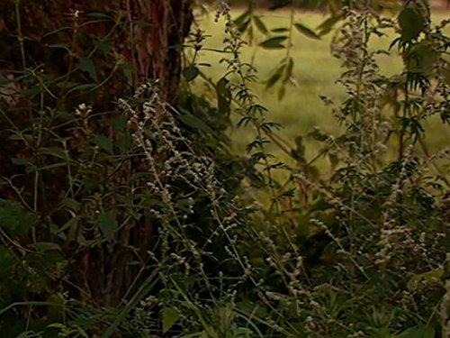 Das Alte Land - Niedersachsens Obstgarten
