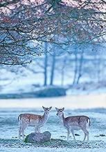 Fallow Deer in Winter Holiday Cards by Sierra Club