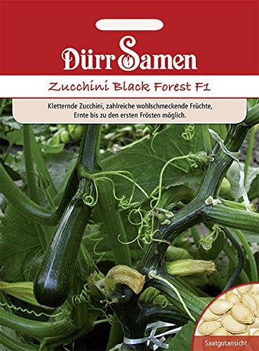 Dürr Samen Zucchini Black Forest F1, kletternd