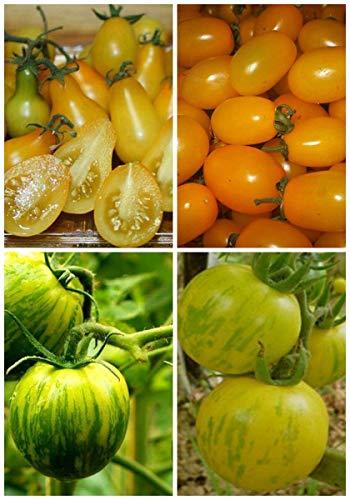 200pcs / Beutel Rare Juicy Chinakohl Gemüsesamen Bio-Topfgartenpflanze für Blumentopf Pflanzer leicht anzubauen