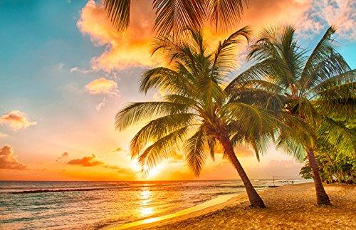 VLIES Fototapete-(1649V)-BARBADOS PALM BEACH-250x180cm-Bahnen-Strand Palmen Wald Palmenstrand Karibik Meer Sonne Sunset Sonnenuntergang Südsee Sunrise