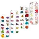 Tagaremuser 144 piezas de flores secas de uñas naturales de arte real seco...