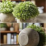 Jobary Set mit 3 künstlichen grünen Gras Pflanzen in grauen Töpfen, kleine dekorative Faux Plastik Pflanzen, ideal für Heim Büro Bad Küche und Outdoor Dekoration - 6