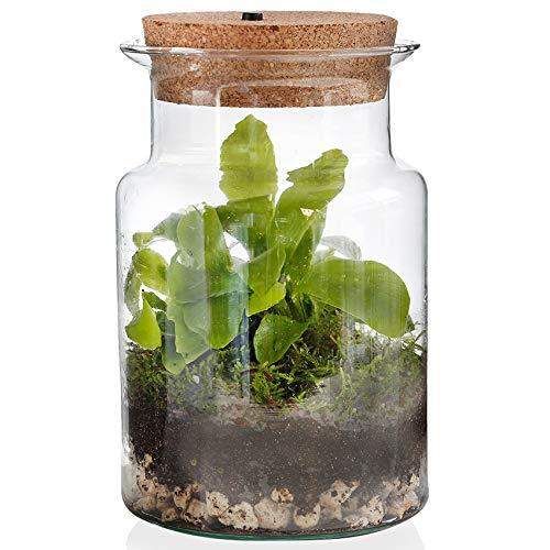 Ecoworld Corky Glass - Farne im Geschlossen Ökosystem mit Beleuchtung - Ø 13 cm Höhe 20 cm
