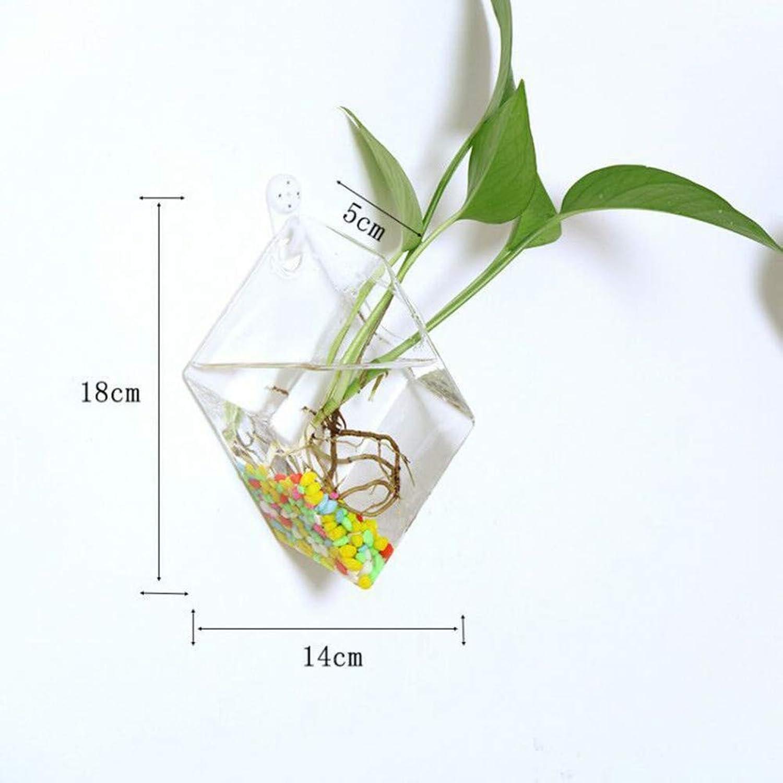 VBJDKB Rétro Verre Transparent Moderne Fixé Au Mur Hydroponique Accrochant Vase Terrarium Bouteille Air Planteur Fleurs Contenant