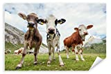 Postereck 3141 - Poster & Leinwand, Kühe Tier Berge Weide