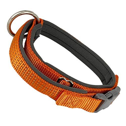 AVANZONA Hundehalsband, verstellbar, gepolstert, reflektierend, Nylon, für kleine Hunde, Orange