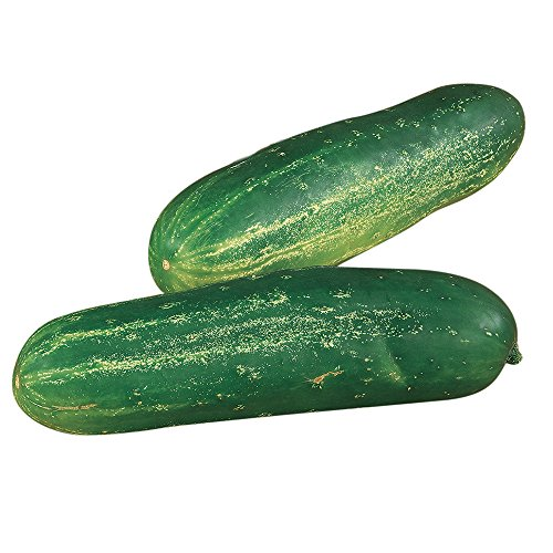 Burpee Straight Eight Slicing Cucumber Seeds 200 seeds