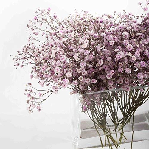 Franquihogar - Florero de Vidrio Cuadrado Rectangular para Plantas hidropónicas, Jarrón de Cristal Hecho a Mano para decoración | Nimes (1,5_L)