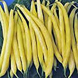Golden Wax Bean, Bush Bean, Non GMO,20+ Seeds, Great Tasting and Healthy