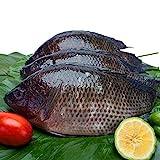 Frozen Tilapia Cleaned Fish 約400g3匹 罗非鱼,又名𩶘鱼、吳郭鱼、非洲鲫鱼、非鲫、越南鱼、南洋鲫等 台湾产 ティラピア魚内蔵清掃済み