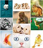 Lot de 50 cartes postales'Animal Kingdom', multipack de cartes postales d'animaux adorables offrant un excellent rapport qualité/prix (cartes postales de format C6)