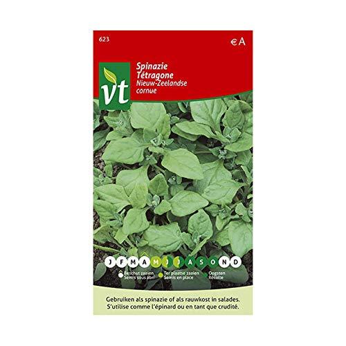 Semi di lattuga cornuta spinaci