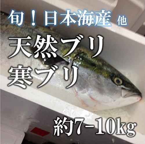 天然ブリ 寒ブリ 生 鮮魚 日本海 約7-10kg 【築地直送】佐渡等 鮮魚 鰤