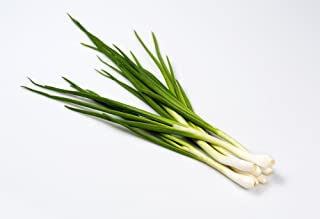 """Welsh Onion""""Baikal"""" - Long Lasting and Delicious Greens - 750 Seeds"""