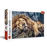 Puzzle 1000 Spiacy lew