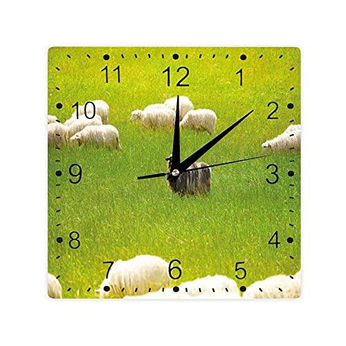 Oveja negra entre cabras blancas en campo de hierba prado animal granja paisaje color cuadrado reloj Slient