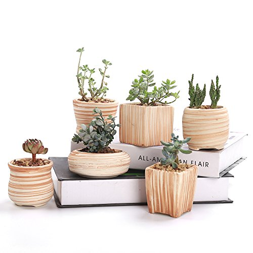 Sun-E 3 Inch Ceramic Wooden Pattern Succulent  Pot 6 in Set