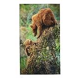 COFEIYISI Toallas de Manos Bear Brown Rock Grizzly Forest Cantabria España Bokeh Brown Bear Cute Bears Animal Toalla Facial Toalla de baño pequeña Microfibra Esencial para Viajar a casa 40x70cm