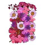 Flores Prensadas Mixtas para DIY Joyería de Resina Manualidad Flores Secas Naturales Prensadas para Arte Decoración Floral Scrapbooking (Púrpura)