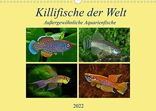 Killifische der WeltCH-Version (Wandkalender 2022 DIN A3 quer)