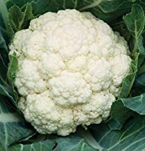 heirloom cauliflower seeds