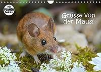 Gruesse von der Maus! (Wandkalender 2022 DIN A4 quer): Zauberhafte Bilder einer kleinen Maus! (Geburtstagskalender, 14 Seiten )