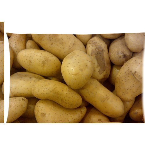 Photo de pommes de terre Housse d'oreiller zippée 50,8 x 76,2 cm