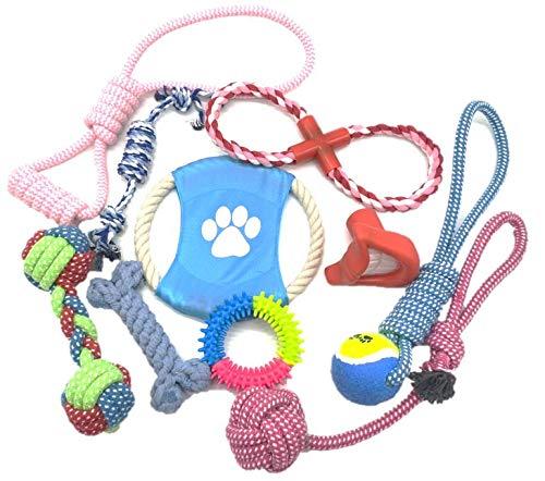 B2Quadrat Dogs Hundespielzeug für kleine bis große Hunde und Welpen, 10er Set für Intelligenz, robust