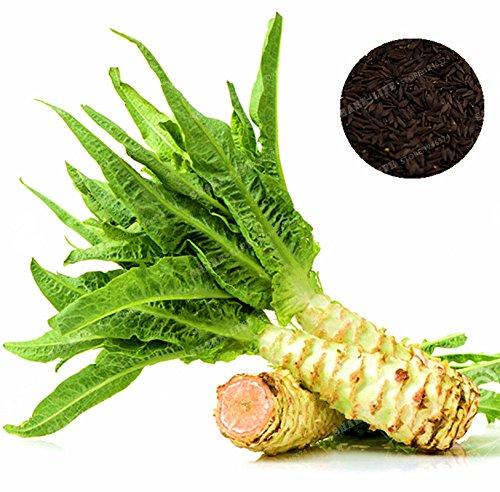100 Pcs asperges graines de laitue délicieux chinois bio celtuce semences Graines de légumes jardin LACTUCA plantes
