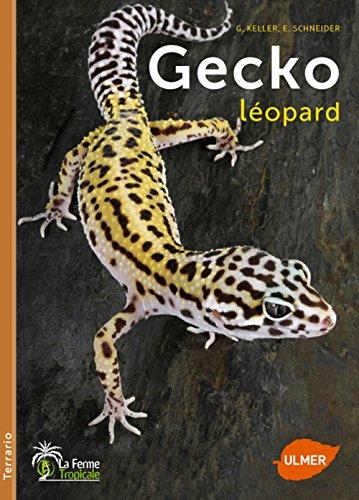 Gecko léopard (Terrario)