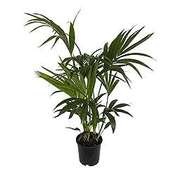 beste luftreiniger pflanze