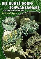Die Bunte Dornschwanzagame: Uromastyx ornata