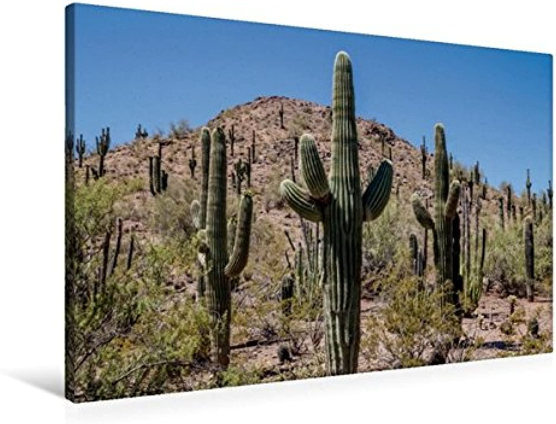 Calvendo Premium Textil-Leinwand 90 cm x 60 cm quer, Arizona Sonora Wüste   Wandbild, Bild auf Keilrahmen, Fertigbild auf echter Leinwand, Leinwanddruck  Typische Landschaft Natur Natur